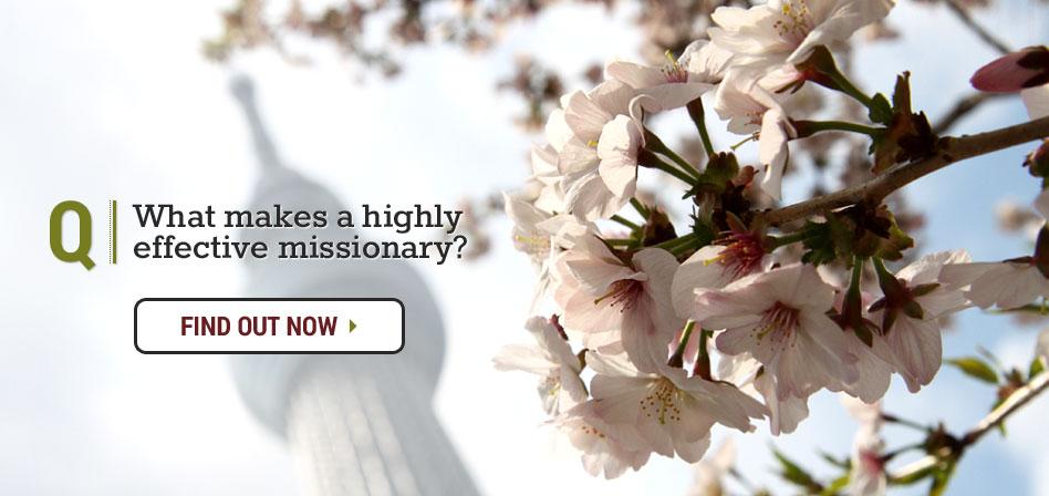Sakura Tree Blossom, Japan Tokyo Mission